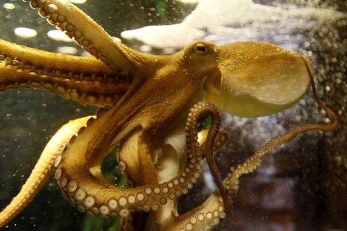 """Vidéo. À la rencontre des défenseurs de la forêt marine du documentaire """"La Sagesse de la pieuvre"""""""