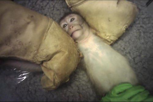 Espagne. Des images de maltraitance animale dans un laboratoire de Madrid font scandale