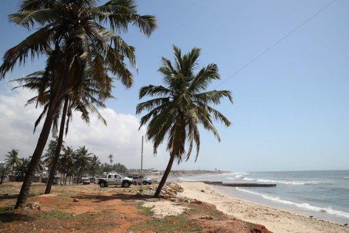 Biodiversité. Une centaine de dauphins et poissons échoués sèment le désordre au Ghana