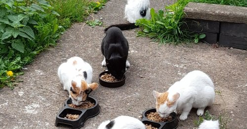 Pet owners urged to neuter their cats after three stray colonies appeared