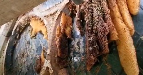 Watch as huge beehive removed from Warwickshire church