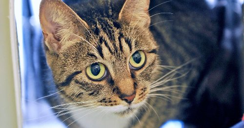 Every cat in UK will have to be microchipped under new rule
