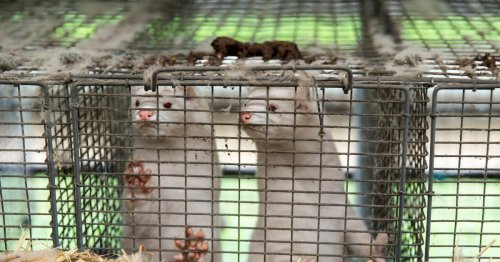 Calls to ban fur trade as more than a million people sign petition