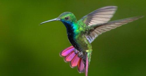 Dead Hummingbirds And Rare Cheese: 5 Weird Black Markets