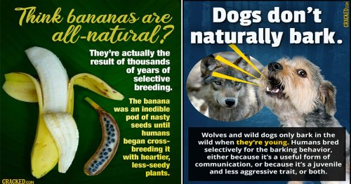 20 'Natural' Things That Aren't