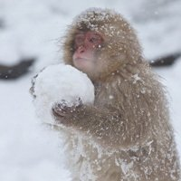 5 Animals Who Taught Themselves Eerily Human Skills