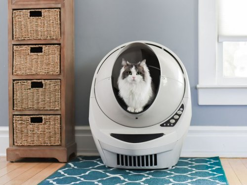 AutoPets thinks outside the litter box with rebrand, rapid growth