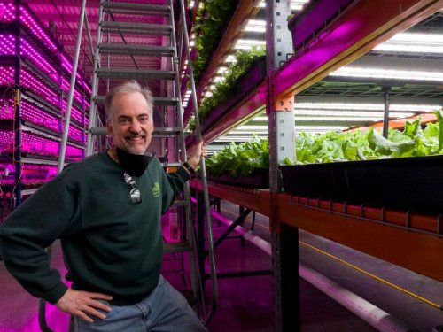 After failures and losses, vertical farm operations expand on growing trend