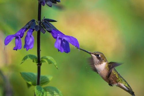 Gardening With Purpose
