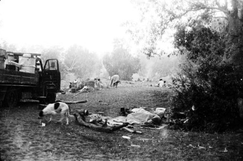 """""""We, the leaders of the Gurindji people …"""" On This Day, 1967 – The Northern Myth"""