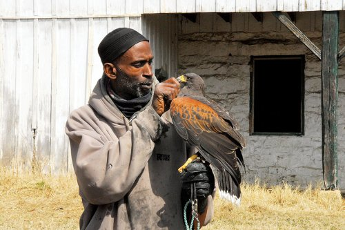 Black master falconer helps birds and at-risk youth take flight