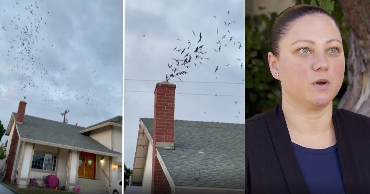 1,500 Birds Invade California Woman's House Through Chimney