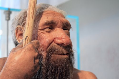 Why Did Neanderthals Disappear?