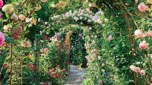 Create a Beautiful Rose Garden