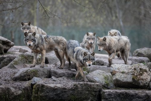 The Science of Alpha Males in Animal Species