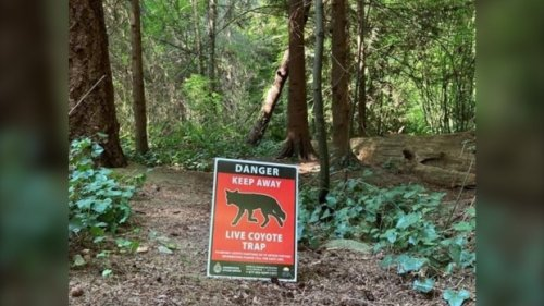 2nd coyote attack in as many days in Vancouver's Stanley Park