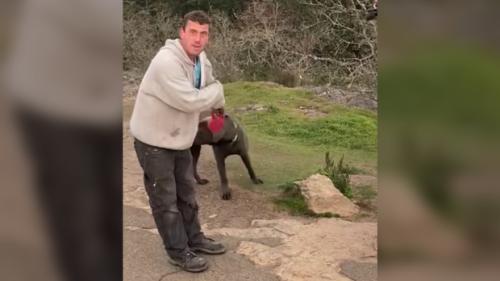 Dog allegedly mauls smaller dog, bites owner in Saanich