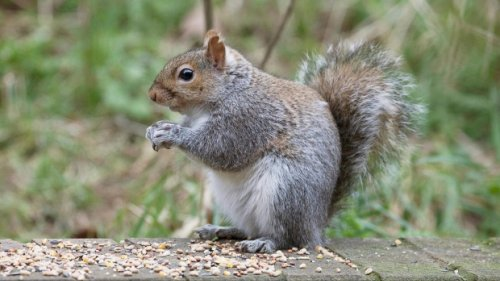 Squirrels found sick, dead after 'toxic substance' left in Richmond, B.C., park