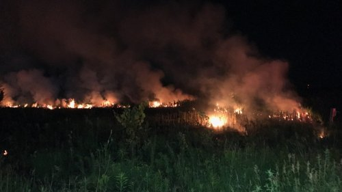 Large brush fire ignites overnight south of London, Ont.