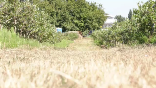 Farmers struggling to produce quality crops amid drought