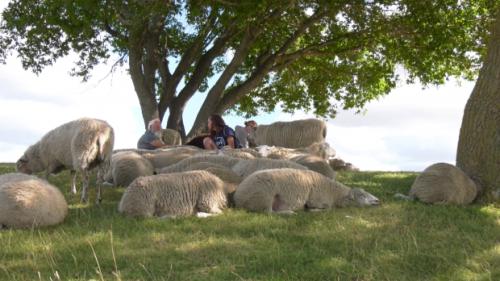 Longtime Fort Saskatchewan shepherds pass torch to new family