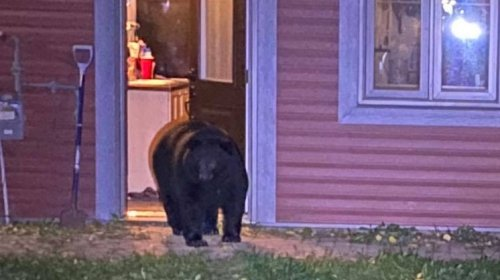 'The bear is in the hallway': Black bear breaks into northern Alta.'s family home