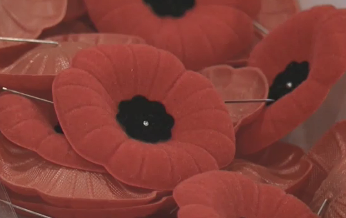 'Given people a common focus': Cambridge locals knitting and crocheting poppies for Remembrance Day project