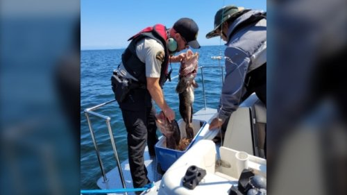 Fisheries officials conduct enforcement blitz in B.C.'s southern Gulf Islands
