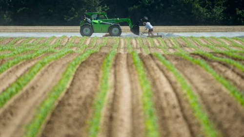 27 charges laid against Norfolk County farm where around 200 workers tested positive for COVID-19