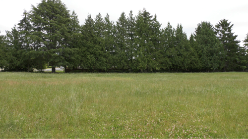 Saanich turns to Victoria, Oak Bay for help with purchasing urban green space