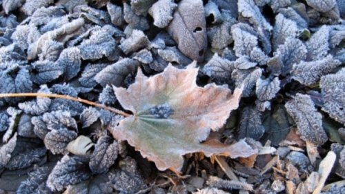 Frost advisory issued for Toronto with temperatures set to drop