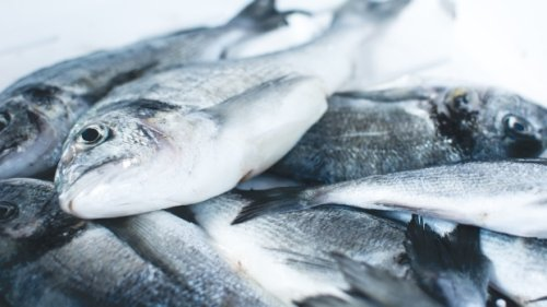 World expected to consume twice as much seafood by 2050, new findings suggest