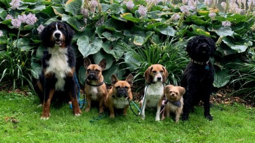 'It's an adjustment': Waterloo dog retreat booming as more pooches face separation anxiety