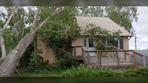 'Ended up with a hole in our upstairs wall': high winds topple trees, damage home