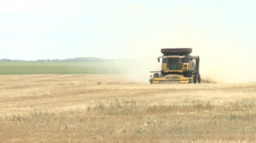 Harvest underway in Sask., according to provincial crop report