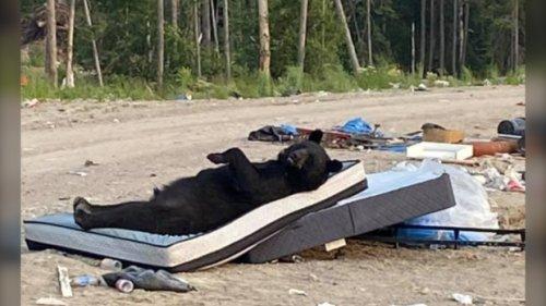 Do not disturb: Hilarious northern Ontario black bear sighting