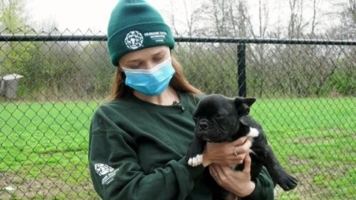 Changes coming to dog import rules; advocates say new rules don't go far enough
