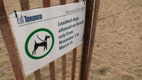 Beaches dog owners relieved to learn new leash law sign was a just a typo
