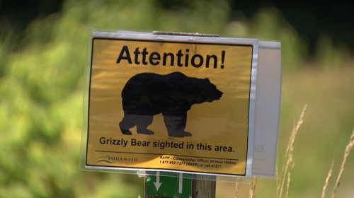Grizzly bear attack sends man to hospital