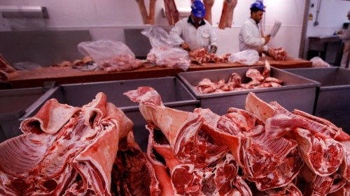 Britain calls for 800 foreign butchers to avoid pig cull