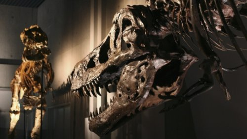 These dinosaur diseases, which might seem familiar, reveal how they lived and died