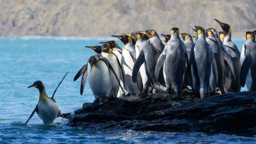 IMAX film 'Antarctica' makes Canadian debut in Victoria