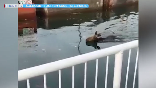 Unusual sight at Sault Ste. Marie Canal