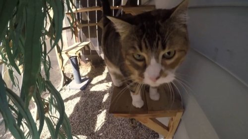 Winnipeg carpenter specializes in 'catios' for feline fun outdoors