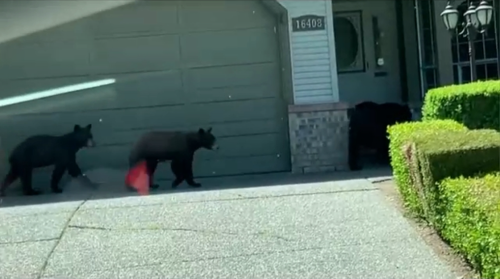 Advocacy group says more education is needed as bear killings continue to rise