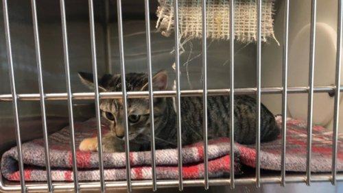 'Crisis proportions': Regina Humane Society reaching cat capacity