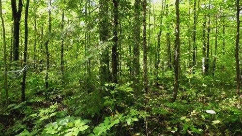 Fall In Love With Maple at family-run sugar bush