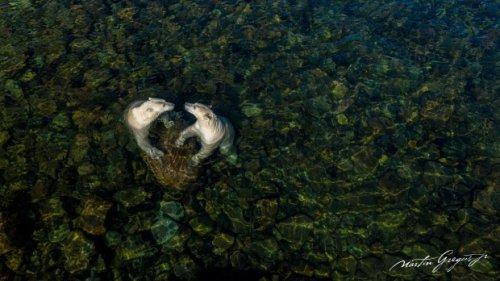 Polar bears in the summer: Vancouver man wins prestigious wildlife photography prize