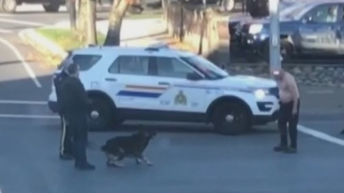 'Was this level of force necessary?': Man hospitalized after police-dog takedown in Nanaimo