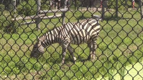 Magnetic Hill Zoo hopes to create multi-million dollar African safari-themed expansion